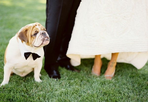Dog with a Cute Bow Ready to Attend the Wedding