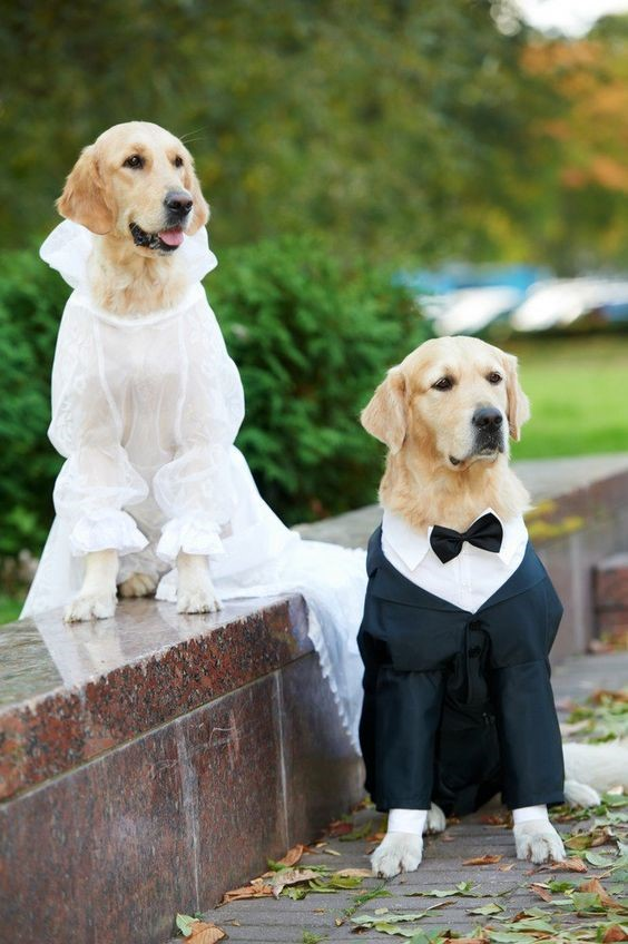 She-dog and He-dog in their Fantastic Wedding Outfits