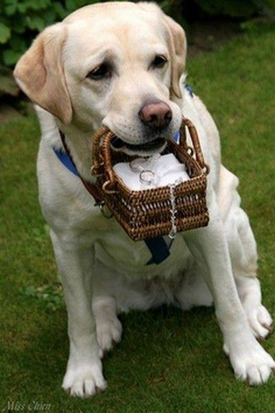 The Cute Dog Ring Bearer