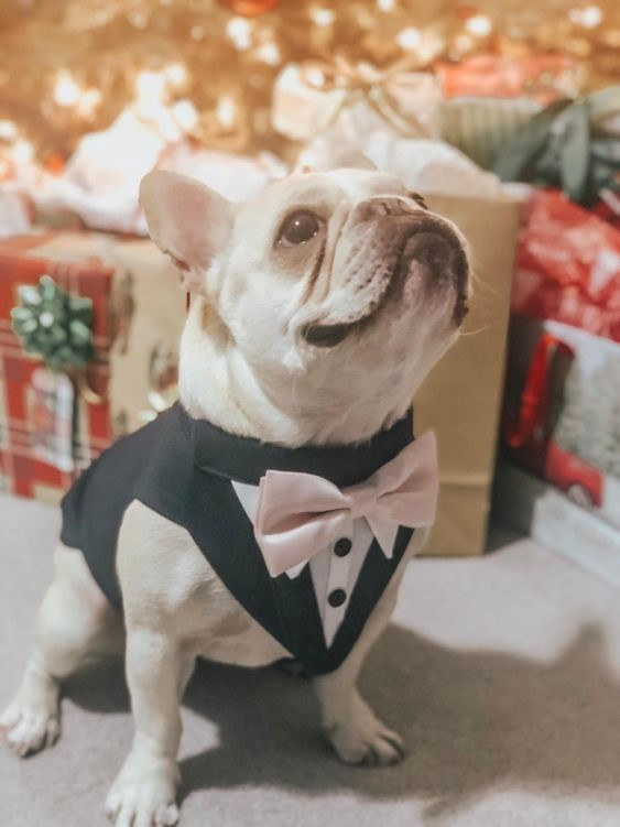 Wedding Dog All Dressed Up Ready for the Picture Taking